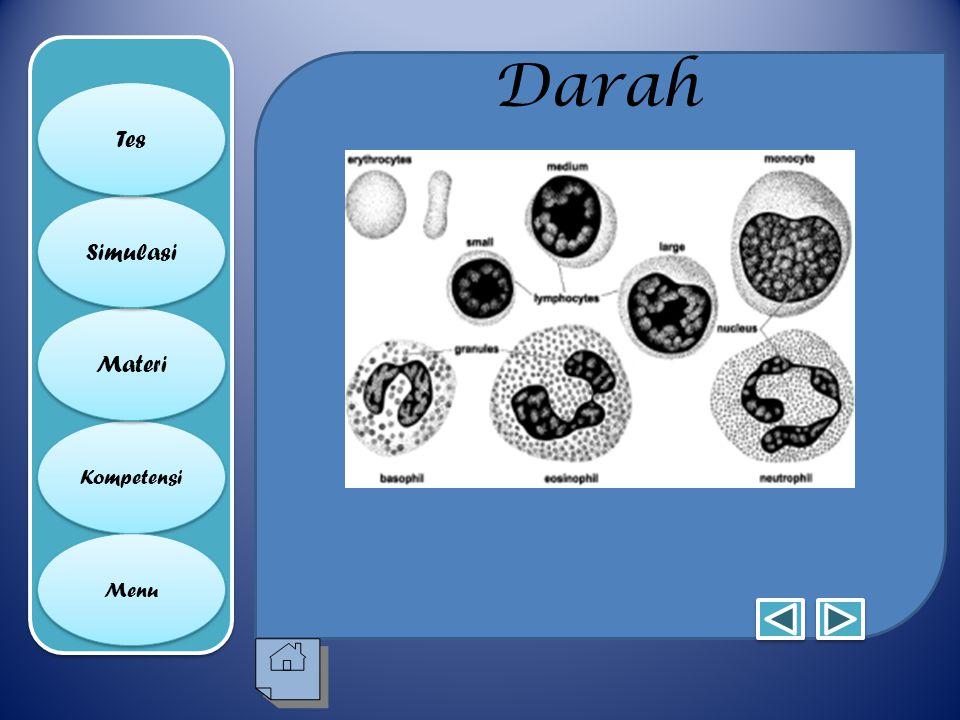 Media Pembelajaran Biologi Please Wait Ppt Download