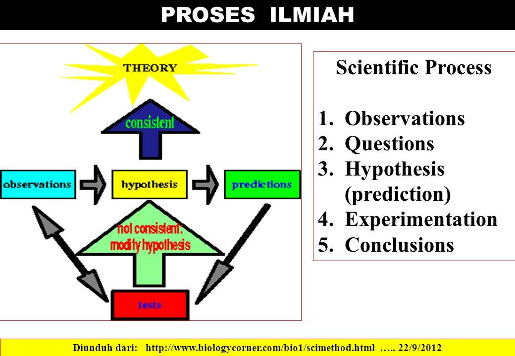 Hypothesis (prediction) Experimentation Conclusions