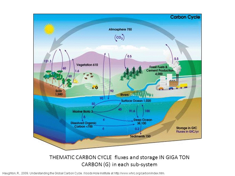 THEMATIC CARBON CYCLE fluxes and storage IN GIGA TON CARBON (G) in each sub-system
