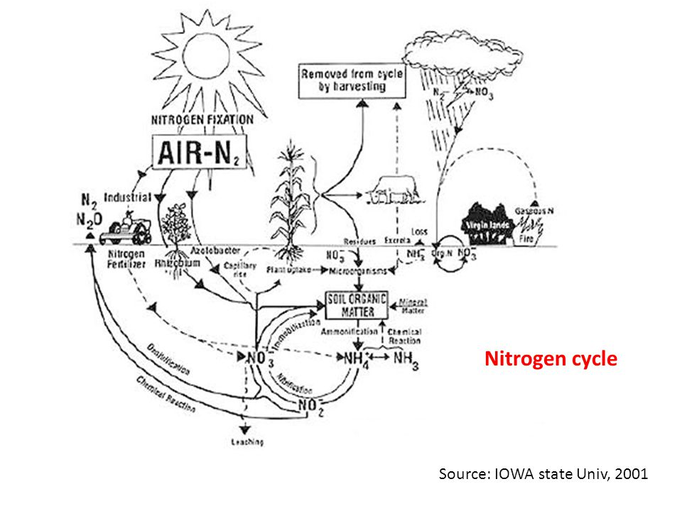 Nitrogen cycle Source: IOWA state Univ, 2001
