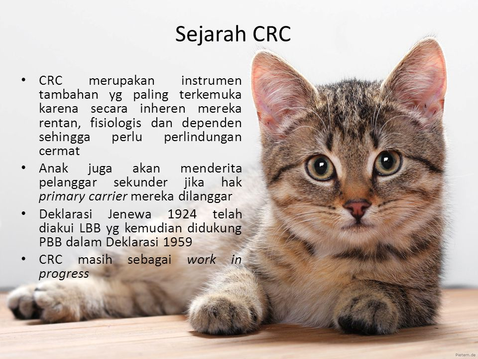 Sejarah CRC