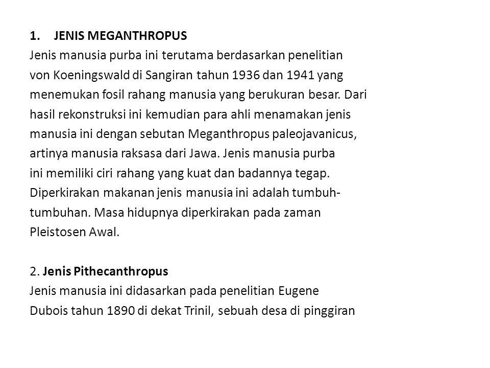 JENIS MEGANTHROPUS Jenis manusia purba ini terutama berdasarkan penelitian. von Koeningswald di Sangiran tahun 1936 dan 1941 yang.