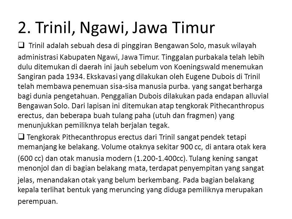 2. Trinil, Ngawi, Jawa Timur