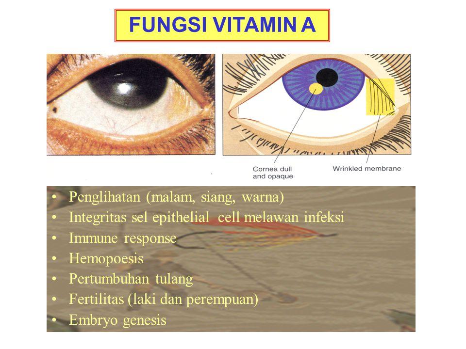 FUNGSI VITAMIN A Penglihatan (malam, siang, warna)