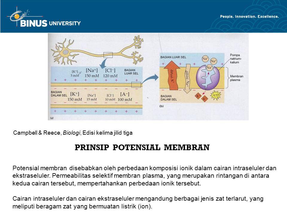 PRINSIP POTENSIAL MEMBRAN