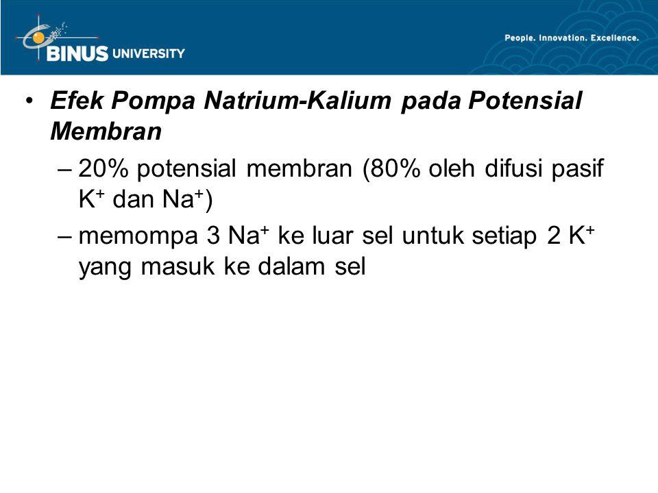Efek Pompa Natrium-Kalium pada Potensial Membran