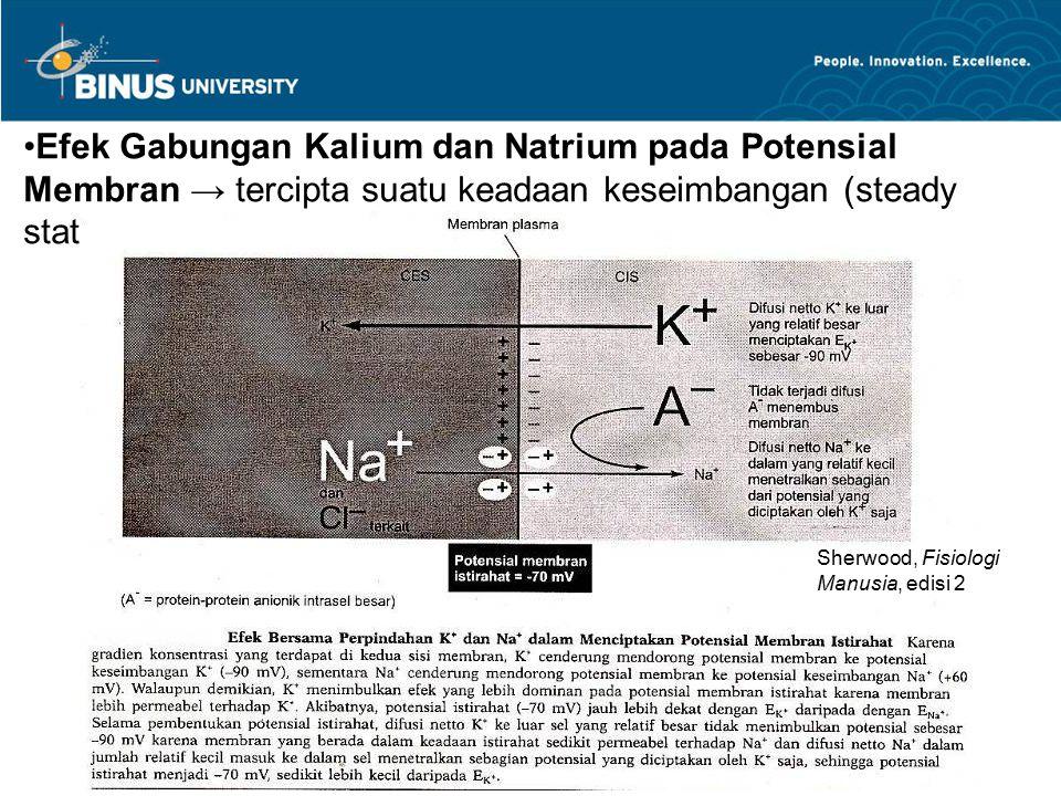 Efek Gabungan Kalium dan Natrium pada Potensial Membran → tercipta suatu keadaan keseimbangan (steady state)
