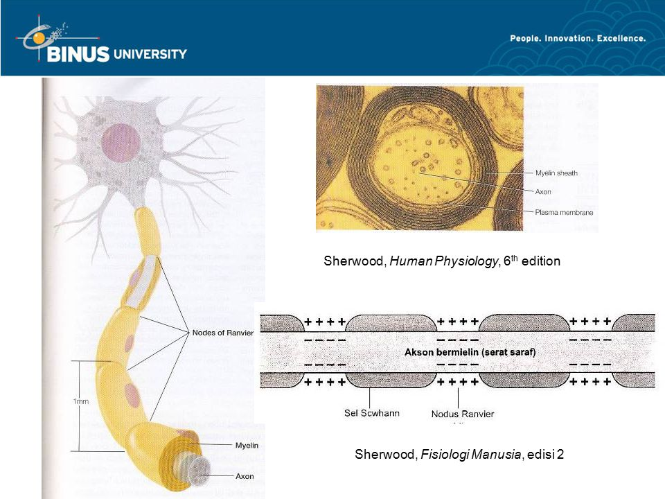 Sherwood, Human Physiology, 6th edition