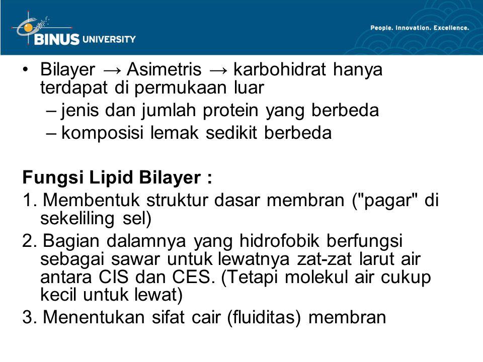 Bilayer → Asimetris → karbohidrat hanya terdapat di permukaan luar