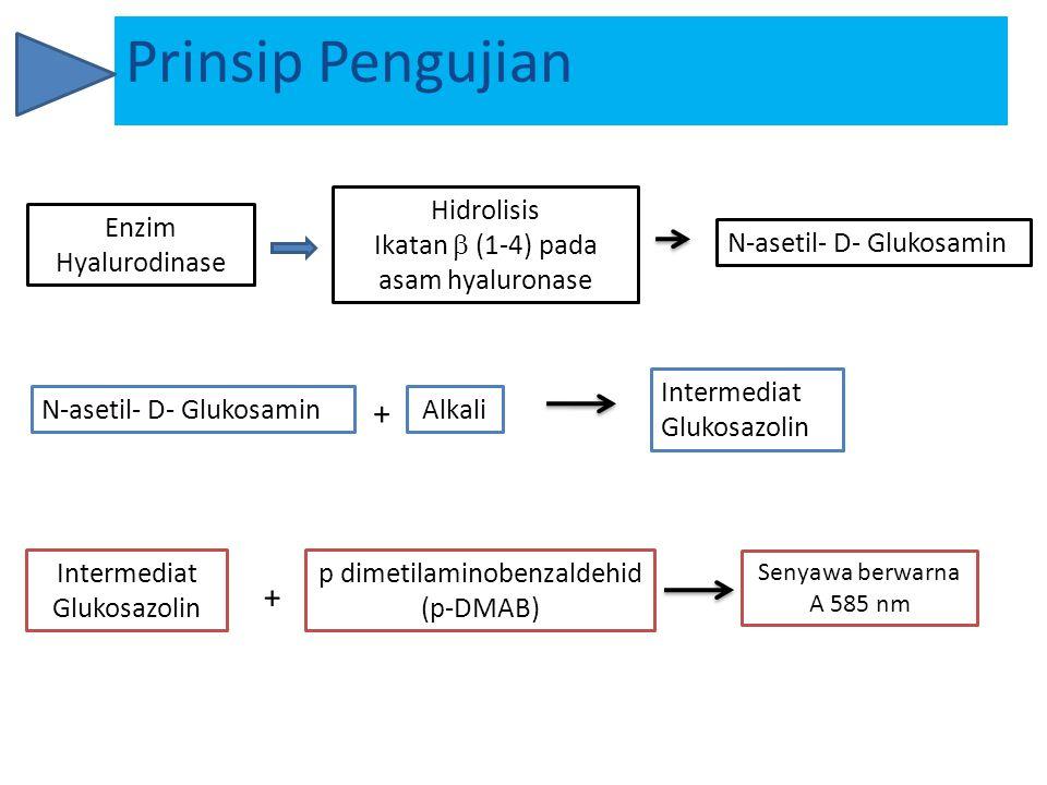 Prinsip Pengujian + + Enzim Hyalurodinase Hidrolisis