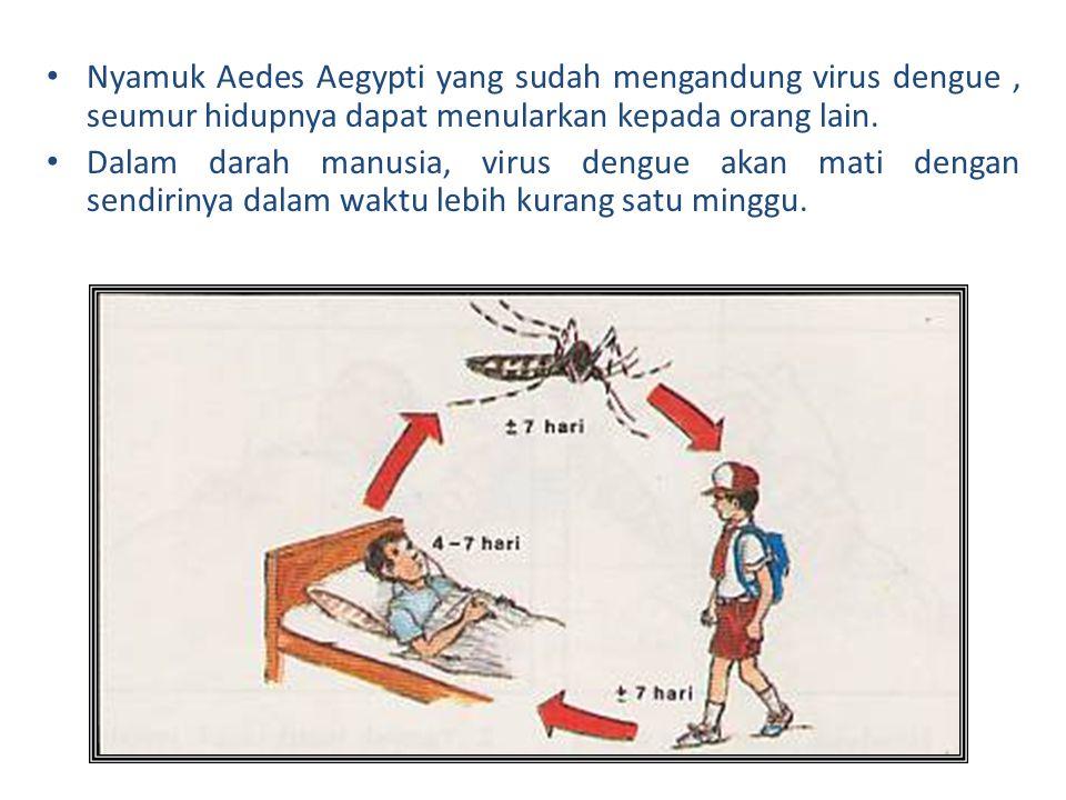 Nyamuk Aedes Aegypti yang sudah mengandung virus dengue , seumur hidupnya dapat menularkan kepada orang lain.