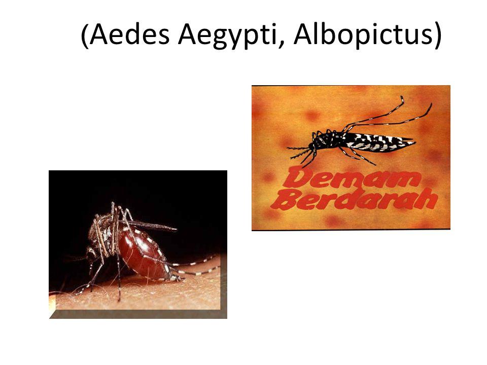 (Aedes Aegypti, Albopictus)