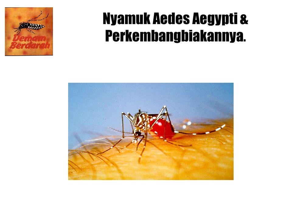 Nyamuk Aedes Aegypti & Perkembangbiakannya.