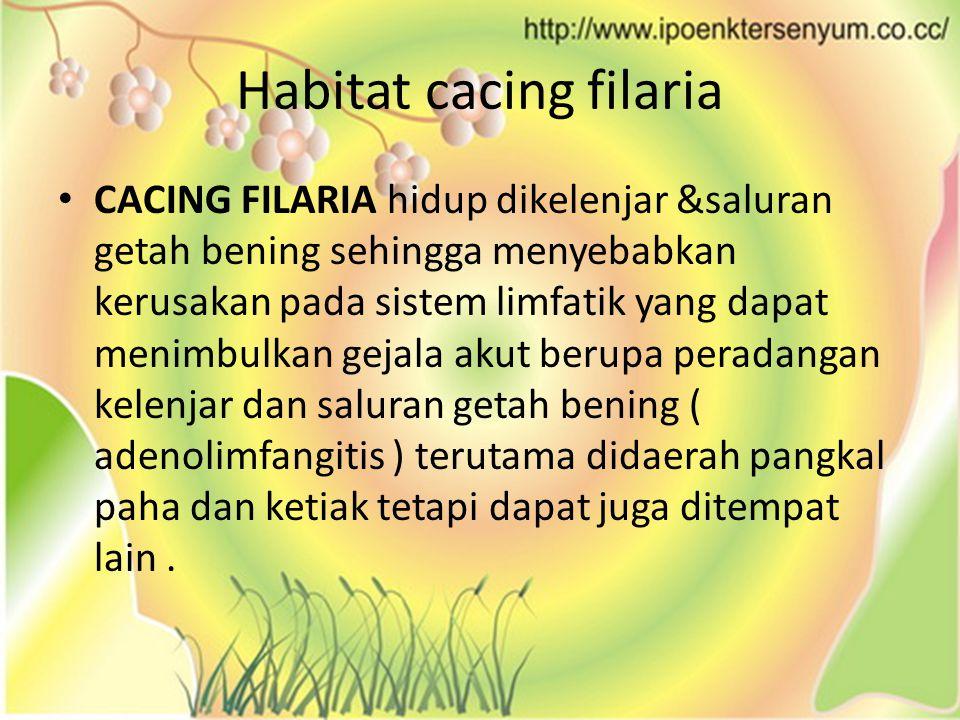 Habitat cacing filaria