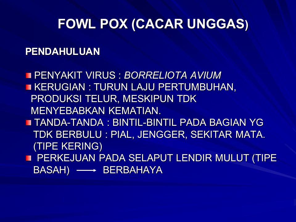 FOWL POX (CACAR UNGGAS)