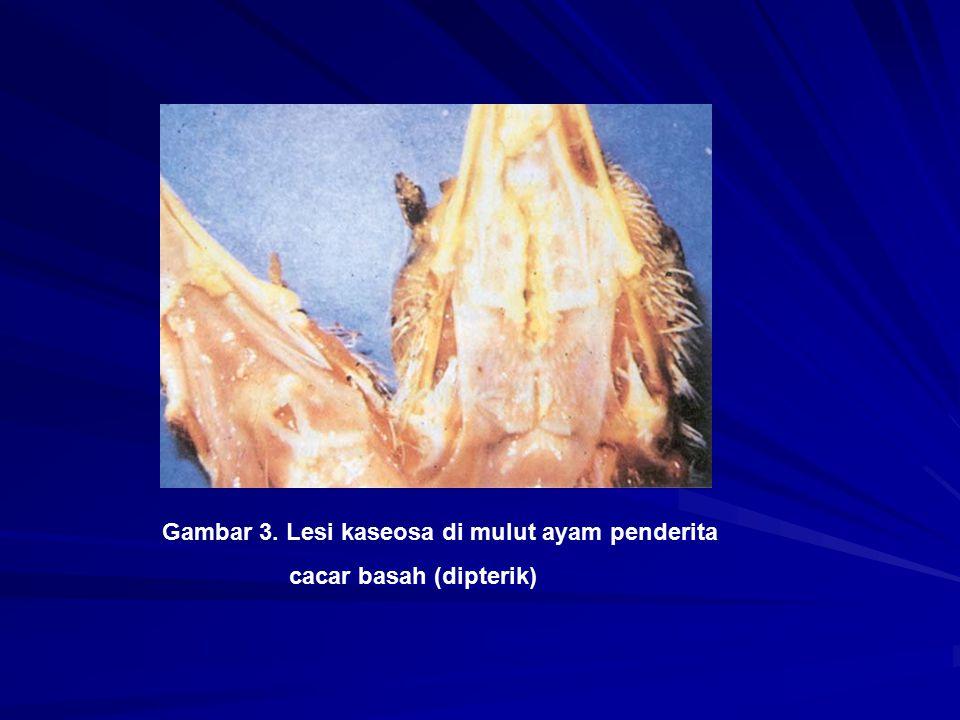 Gambar 3. Lesi kaseosa di mulut ayam penderita
