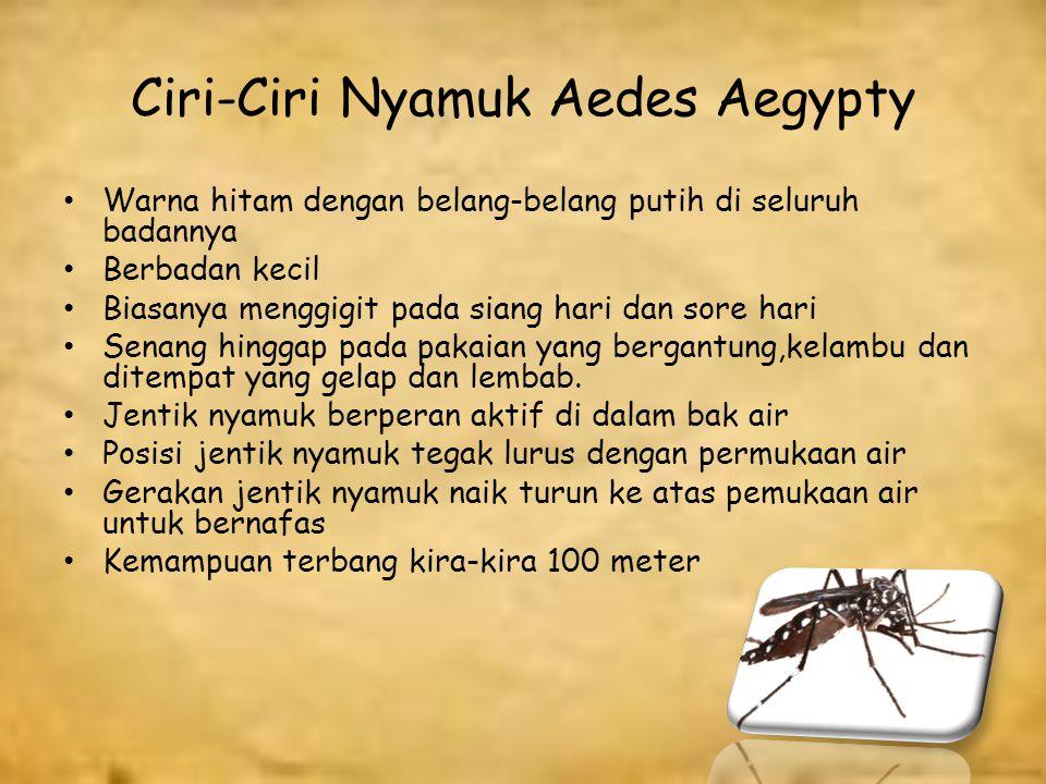 Ciri-Ciri Nyamuk Aedes Aegypty