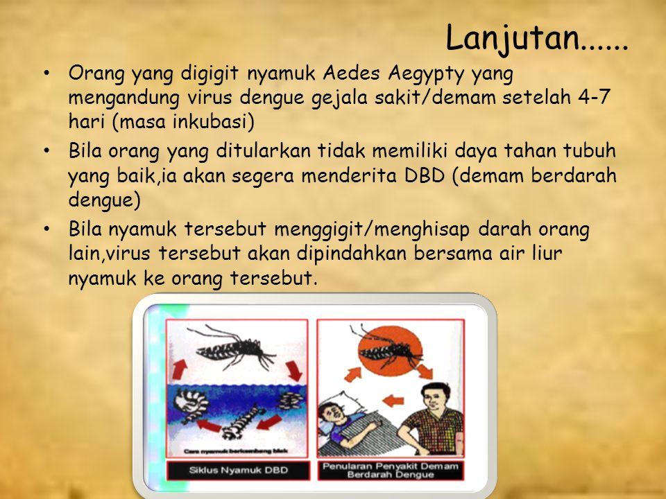 Lanjutan...... Orang yang digigit nyamuk Aedes Aegypty yang mengandung virus dengue gejala sakit/demam setelah 4-7 hari (masa inkubasi)