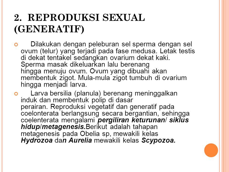 2. REPRODUKSI SEXUAL (GENERATIF)