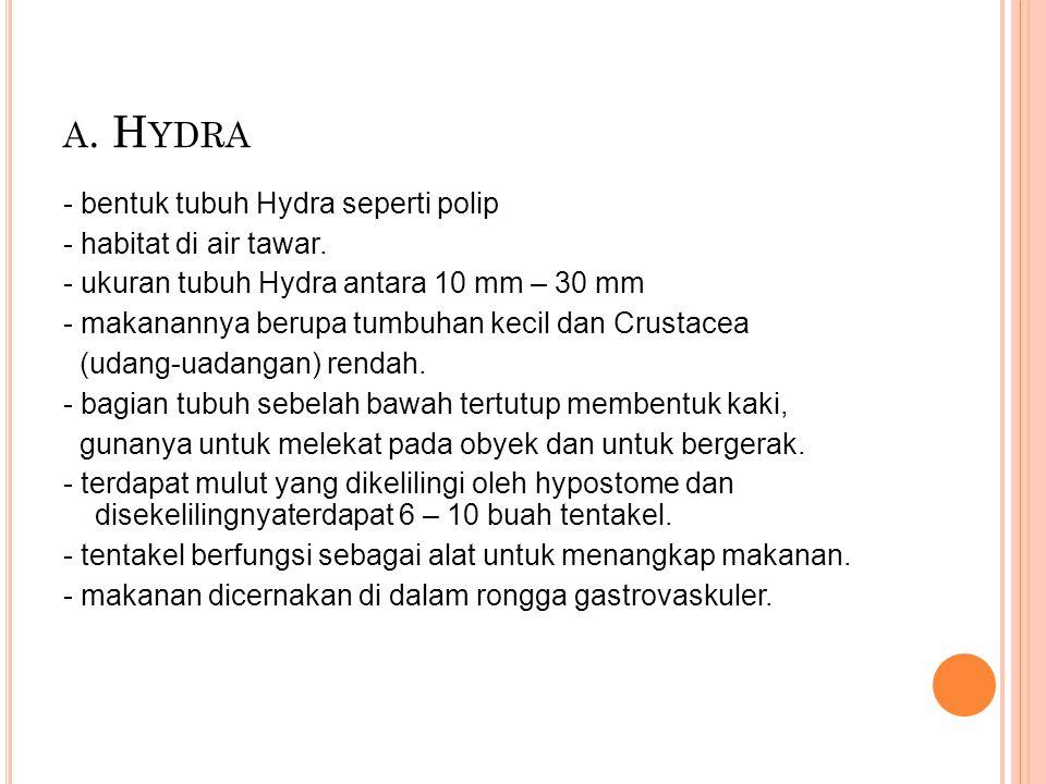 a. Hydra