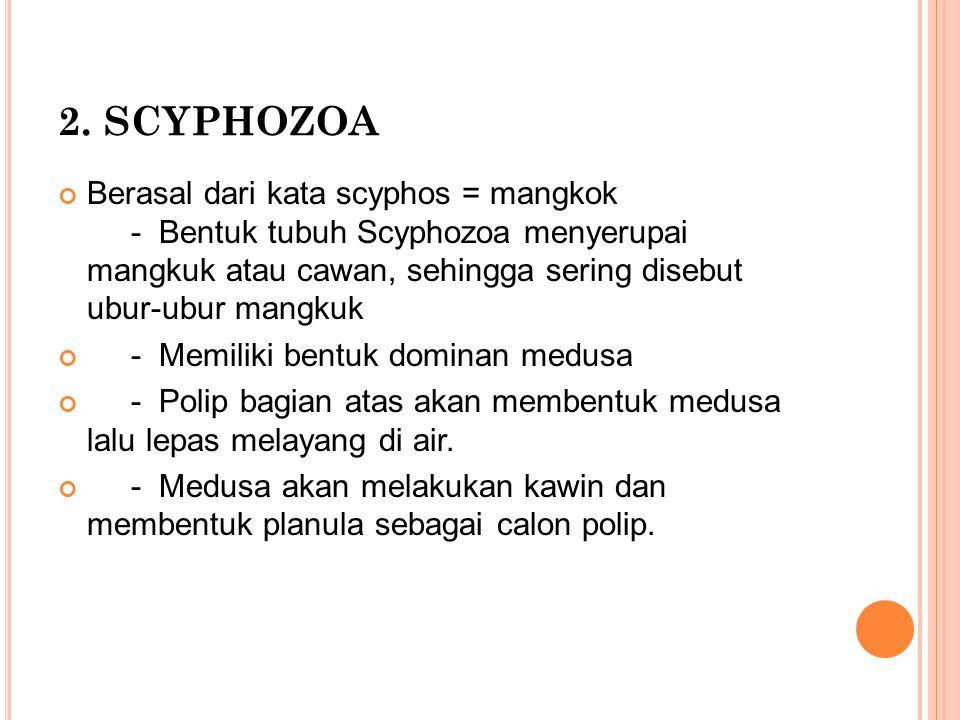 2. SCYPHOZOA