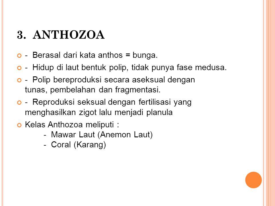 3. ANTHOZOA - Berasal dari kata anthos = bunga.