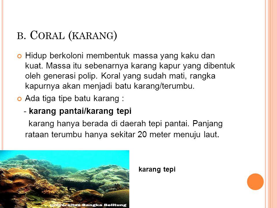 b. Coral (karang)