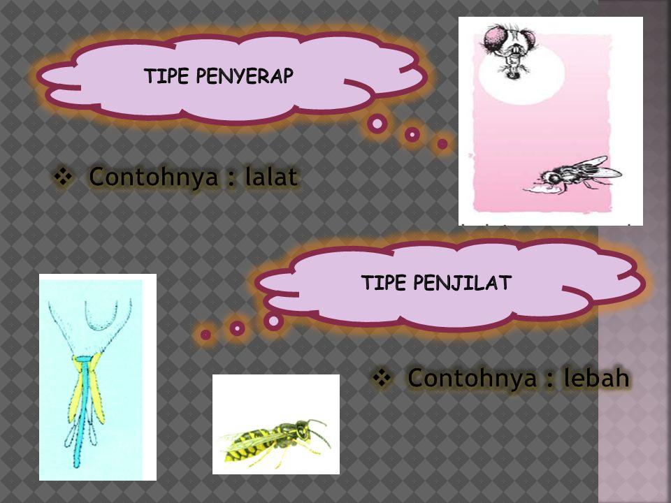 TIPE PENYERAP Contohnya : lalat TIPE PENJILAT Contohnya : lebah