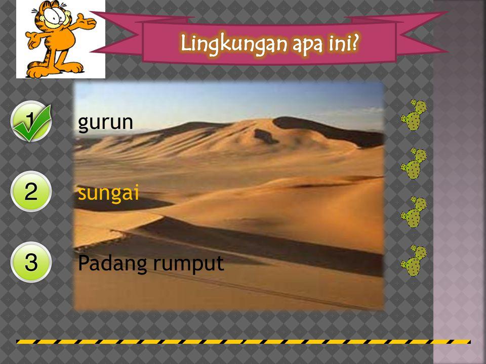 Lingkungan apa ini gurun sungai Padang rumput