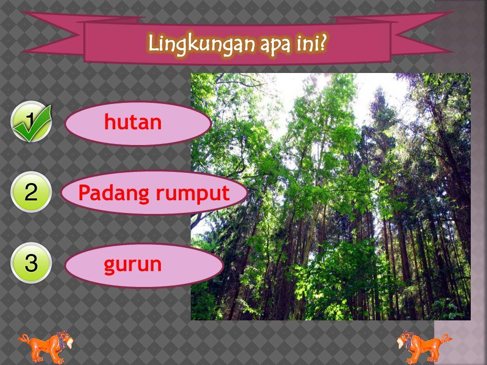 Lingkungan apa ini hutan Padang rumput gurun
