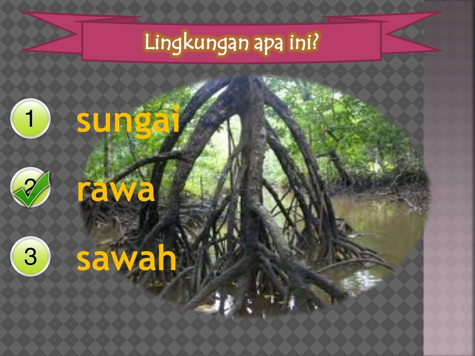 Lingkungan apa ini sungai rawa sawah