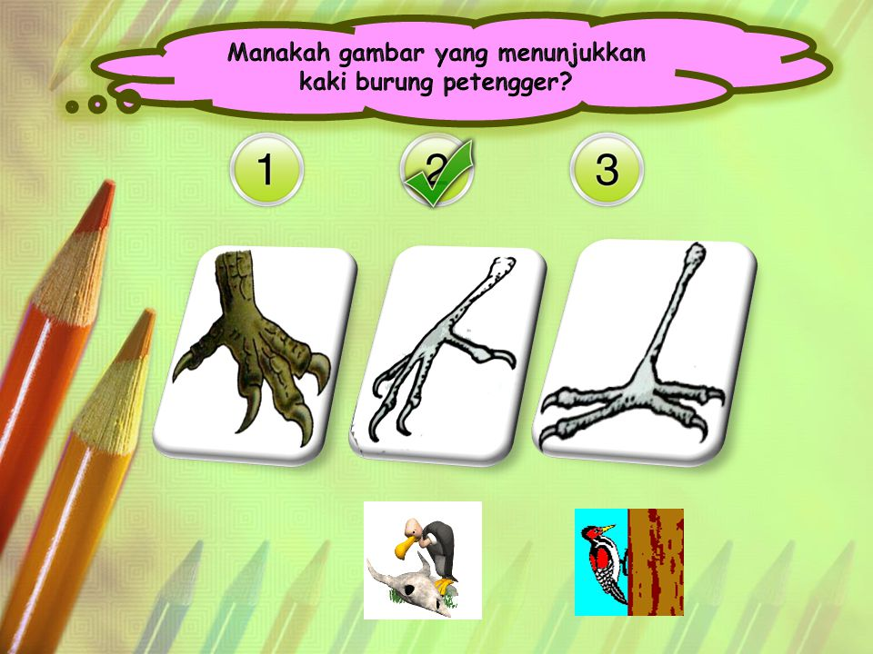 Manakah gambar yang menunjukkan kaki burung petengger