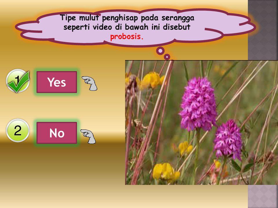 Tipe mulut penghisap pada serangga seperti video di bawah ini disebut probosis.