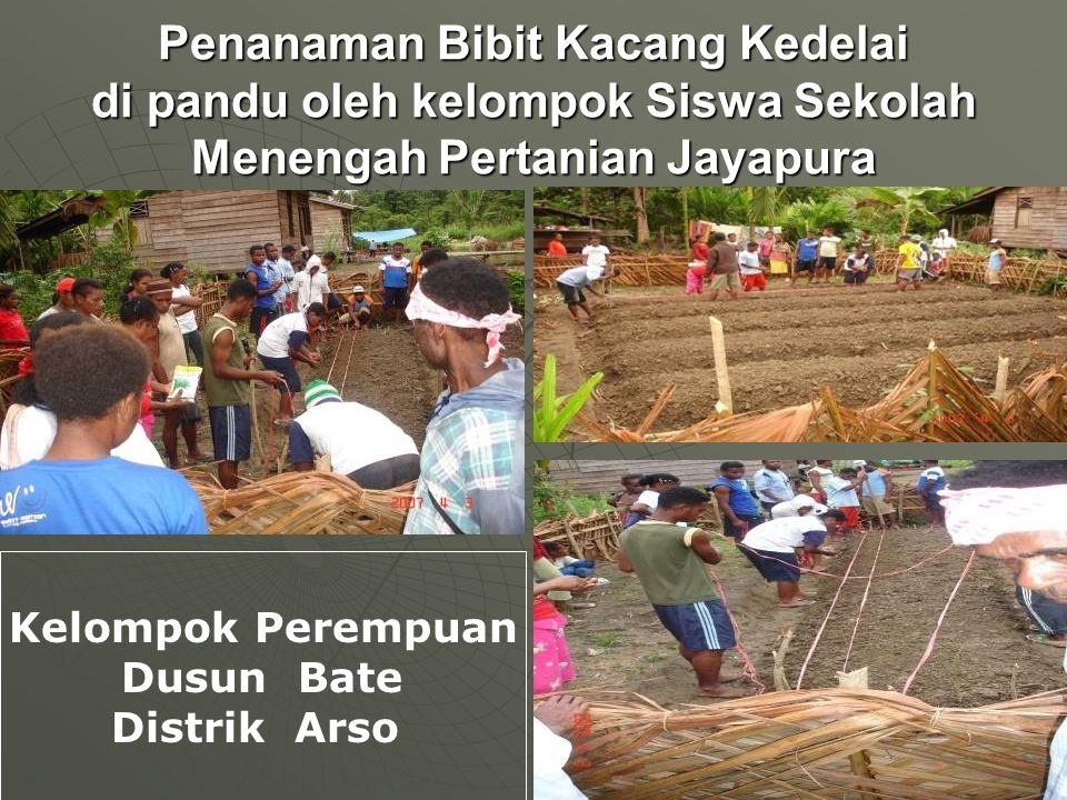 Penanaman Bibit Kacang Kedelai di pandu oleh kelompok Siswa Sekolah Menengah Pertanian Jayapura