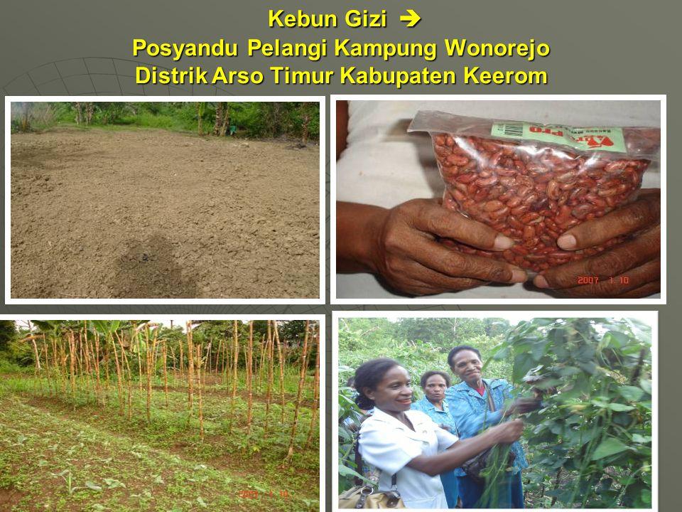 Kebun Gizi  Posyandu Pelangi Kampung Wonorejo Distrik Arso Timur Kabupaten Keerom