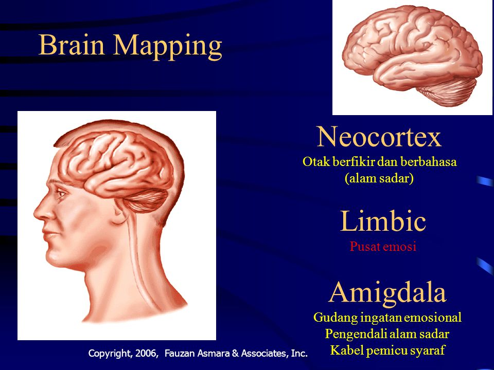 Neocortex Otak berfikir dan berbahasa (alam sadar)