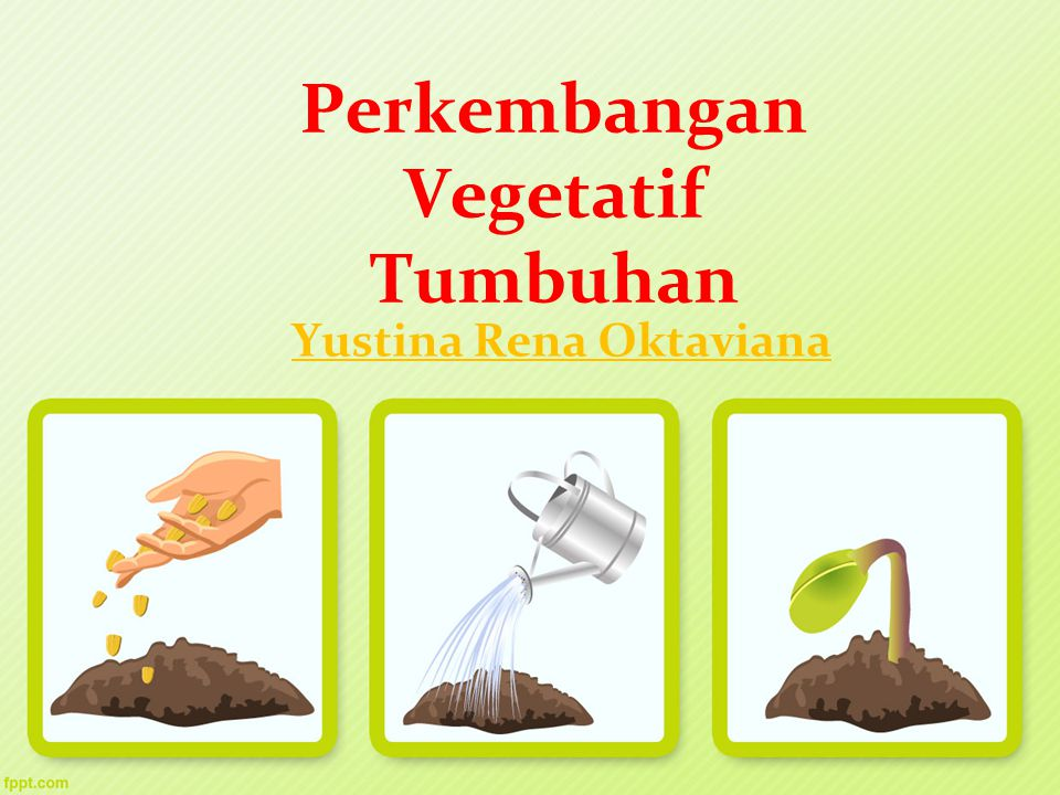 Perkembangan Vegetatif Tumbuhan