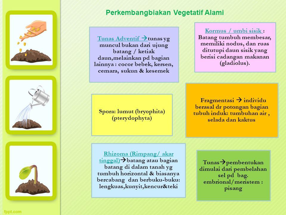 Spora: lumut (bryophita) (pterydophyta)