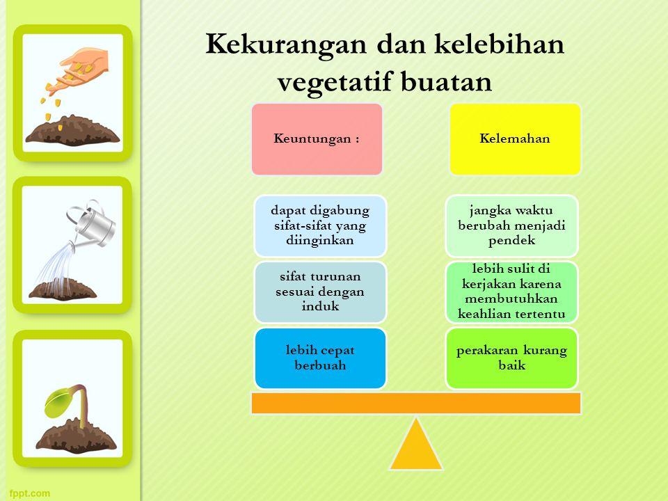 Kekurangan dan kelebihan vegetatif buatan