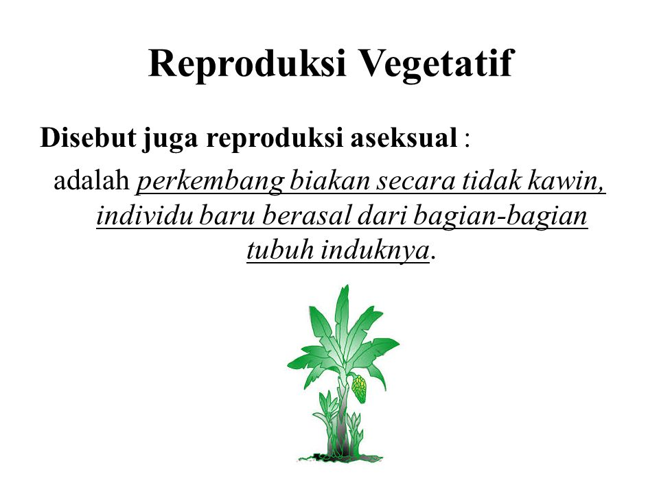 Reproduksi Vegetatif