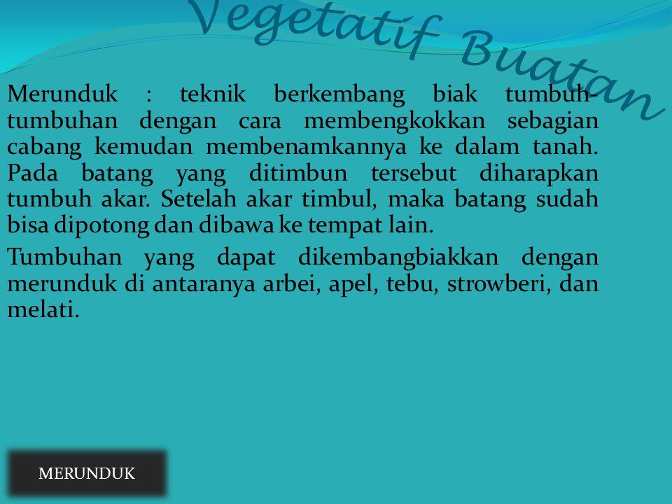 Vegetatif Buatan