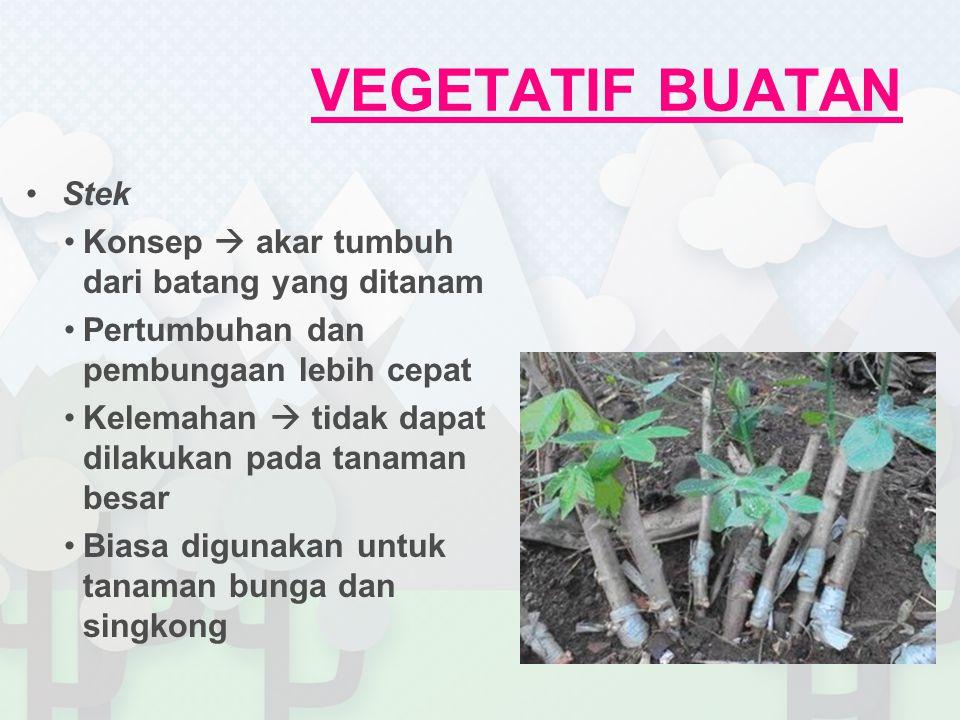 VEGETATIF BUATAN Stek Konsep  akar tumbuh dari batang yang ditanam