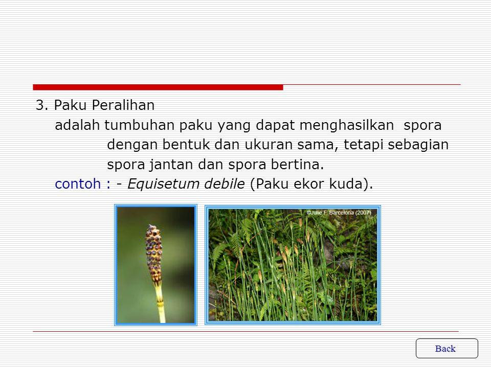 adalah tumbuhan paku yang dapat menghasilkan spora