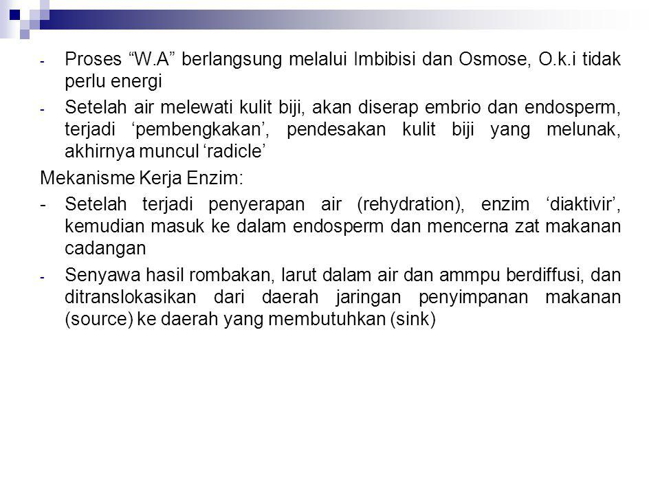 Proses W. A berlangsung melalui Imbibisi dan Osmose, O. k
