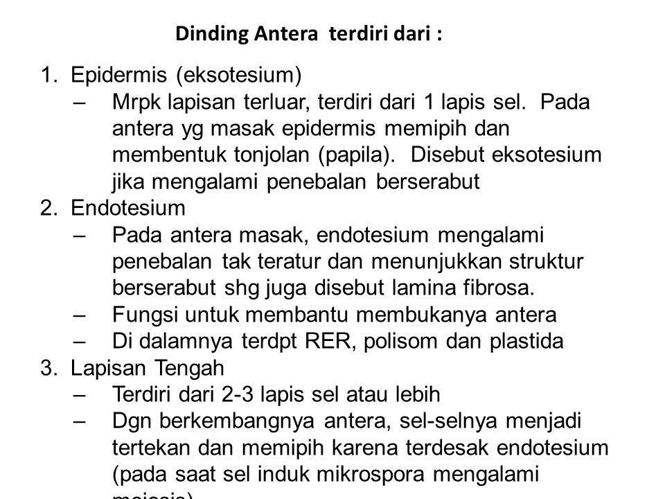 Dinding Antera terdiri dari :
