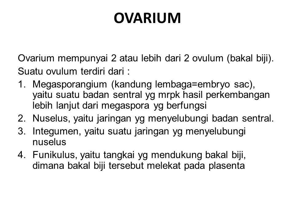 OVARIUM Ovarium mempunyai 2 atau lebih dari 2 ovulum (bakal biji).