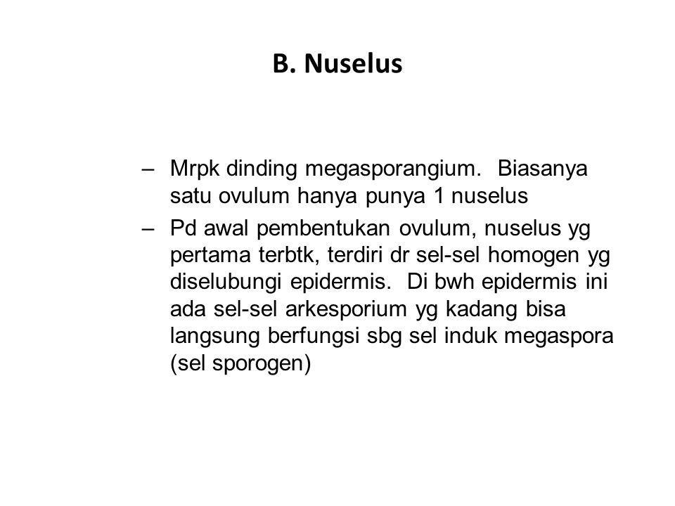 B. Nuselus Mrpk dinding megasporangium. Biasanya satu ovulum hanya punya 1 nuselus.