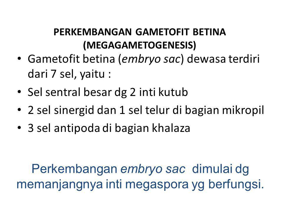 PERKEMBANGAN GAMETOFIT BETINA (MEGAGAMETOGENESIS)