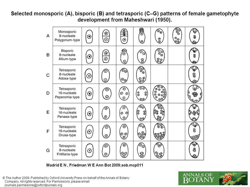 Selected monosporic (A), bisporic (B) and tetrasporic (C–G) patterns of female gametophyte development from Maheshwari (1950).