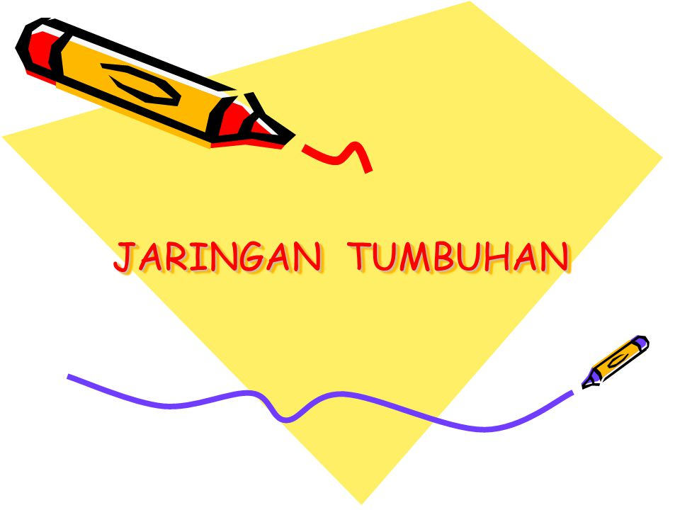 Jaringan tumbuhan ppt download 1 jaringan tumbuhan ccuart Image collections